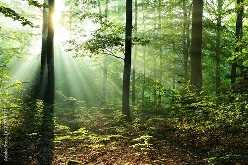 Fototapeta premium Piękny wschód słońca w lesie