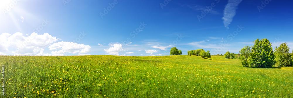 Zielony pole z żółtymi dandelions i niebieskim niebem. Panoramiczny widok trawa i kwiaty na wzgórzu na pogodnym wiosna dniu <span>plik: #223962138   autor: candy1812</span>