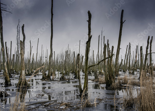 Toter Wald im Überschwemmungsbegiet auf er Insel Usedom
