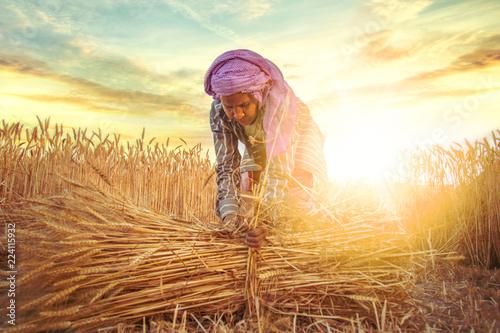 Canvas Print woman making bundles of wheat