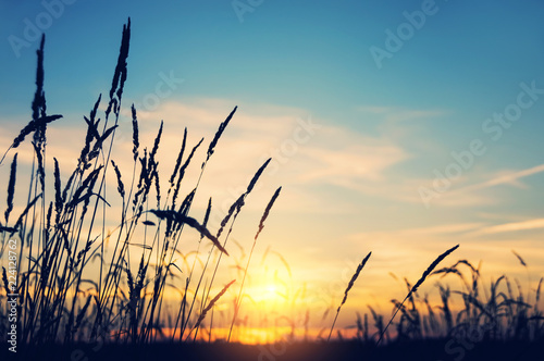 Wallpaper Mural Evening bright landscape with tall grass against the backdrop of the setting sun