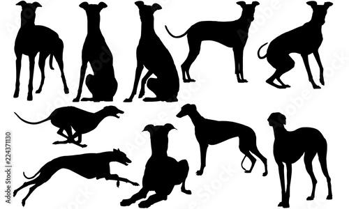 Fotografiet Greyhound Dog svg files cricut,  silhouette clip art, Vector illustration eps, B