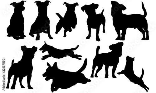 Photo Jack Russell Terrier Dog svg files cricut,  silhouette clip art, Vector illustra