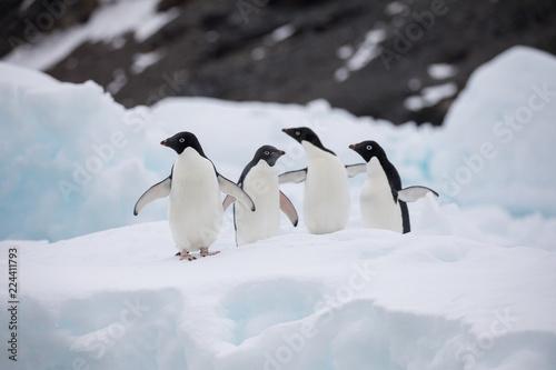 Canvas Print penguin in the arctic