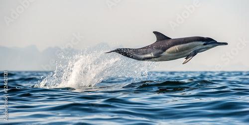 Canvas A dolphin and a bird.