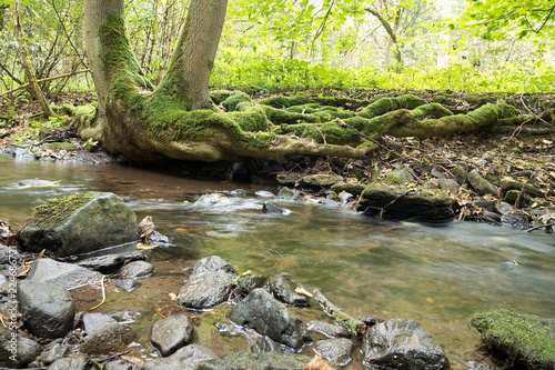 Tela Creek with roots of tree in rainy wather. Oparno. Czech Republic.