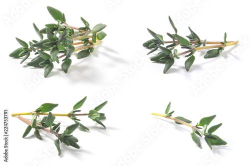Set of Thyme fresh herbs (Thymus vulgaris) shrub. Fine herb. Isolated on a white background.
