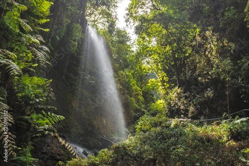 Wallpaper Mural Los Tilos Waterfall in La Palma, Canary Islands