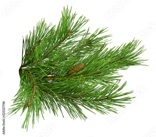 Fotografie, Tablou Nature Symbol of Christmas and New Year isolated on white background