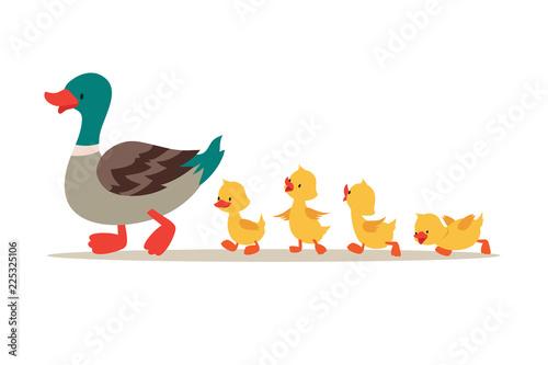 Slika na platnu Mother duck and ducklings