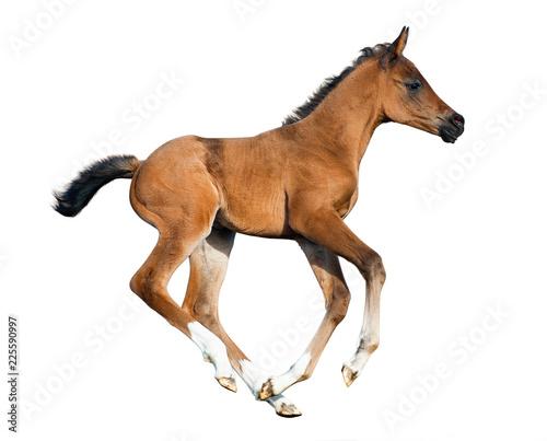 Foal isolated Fototapete