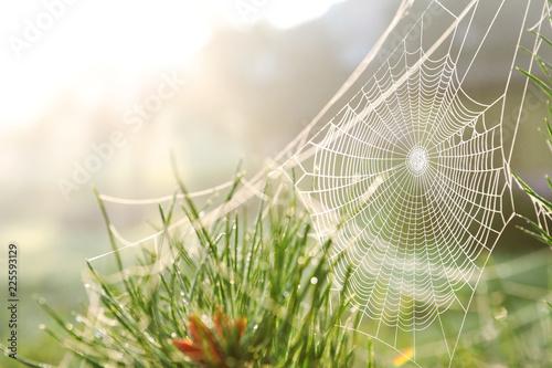 Obraz na płótnie Cobweb on wild meadow, closeup view