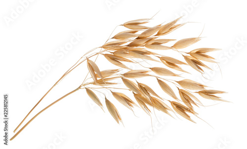 Oat plant isolated on white without shadow