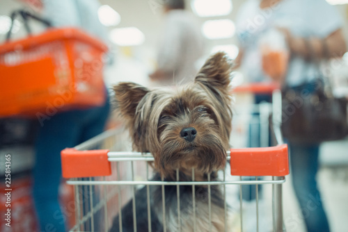 Cute little puppy dog sitting in a shopping cart on blurred shop mall background with people. selective focus macro shot with shallow DOF
