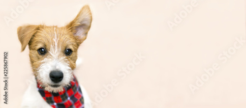 Funny cute pet dog puppy listening with ear - web banner with copy space