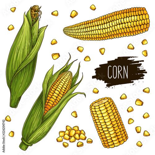 Canvas Print Hand drawn corn set