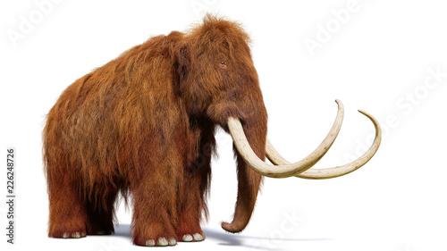 Fototapeta premium mamut włochaty, prehistoryczny ssak na białym tle z cieniem na białym tle (ilustracja 3d)