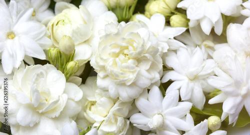 Canvas Print White jasmine flowers fresh flowers natural