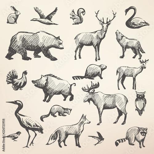 Obraz na płótnie european forrest wild animals collection of stylized vector silhouettes