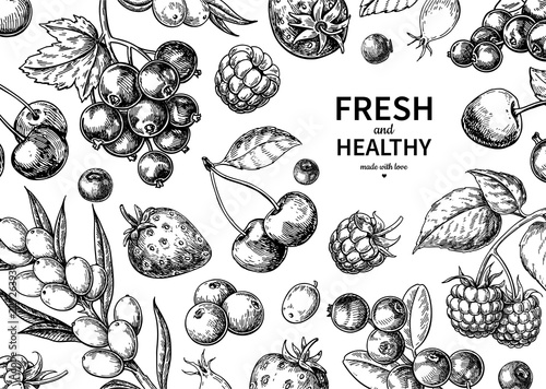 Fototapete Wild berry drawing. Hand drawn vintage vector frame. Summer fruit set