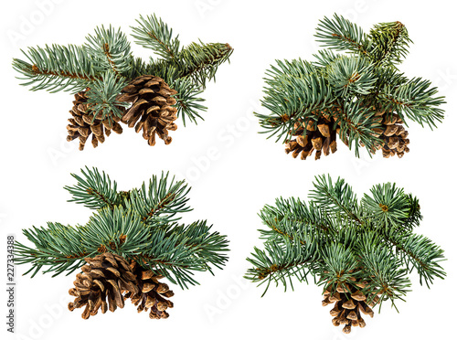 Fototapeta Green fir branch on white background with clipping pass