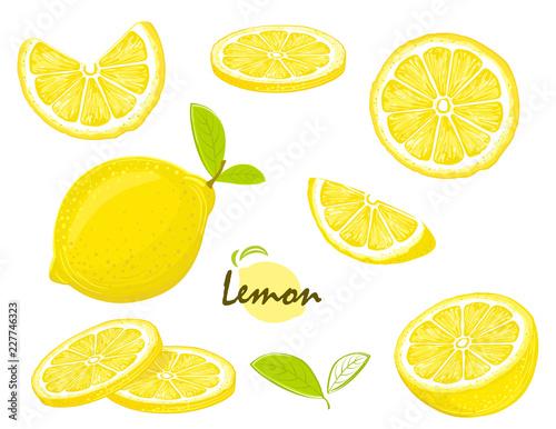 Obraz na plátně Fresh lemon fruits, collection of vector illustrations