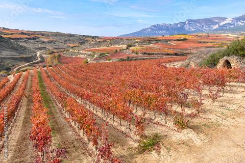 Viñedos en otoño, Rioja Alavesa, España