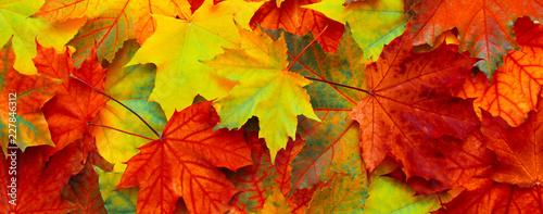 Fotografie, Obraz Beautiful Nature autumn Background with fallen maple leaves