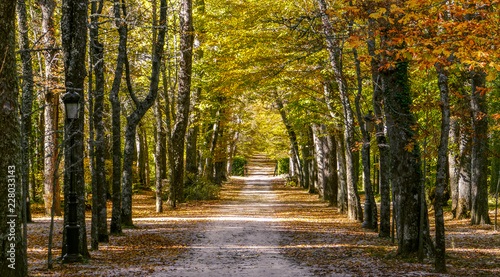 Photo Camino en medio de un bosque de abedules y otros árboles en otoño