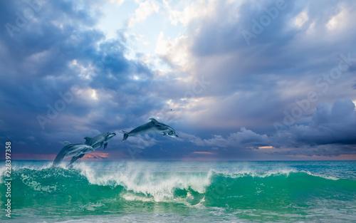 Fototapeta premium Grupa delfinów skoki na wodzie - piękny krajobraz i błękitne niebo