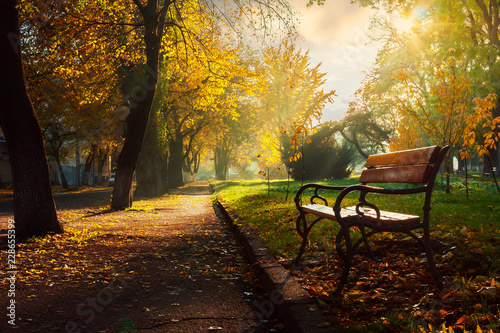Fotografering bench in the autumn city park. beautiful empty morning scenery