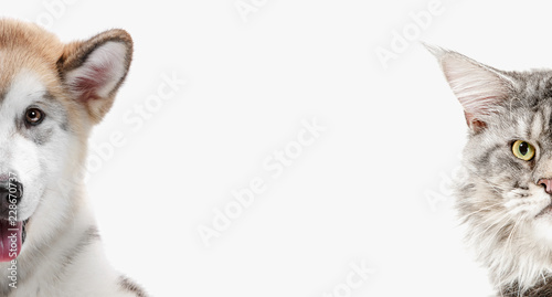 The funny image of a dog and cat looking at the camera isolated on white