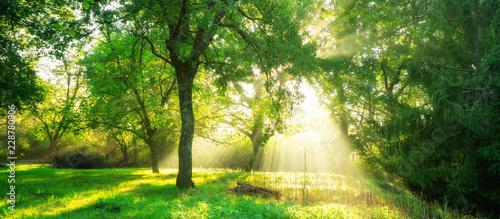 Obraz na płótnie Green forest landscape background at sunrise.