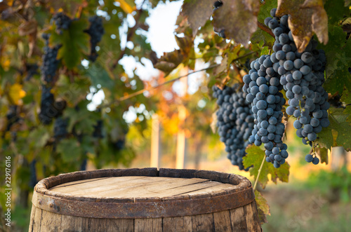Photo Red wine with barrel on vineyard in green Tuscany, Italy