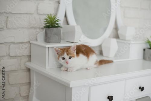 Carta da parati Cute playful kitten posing in bedroom on the dressing table