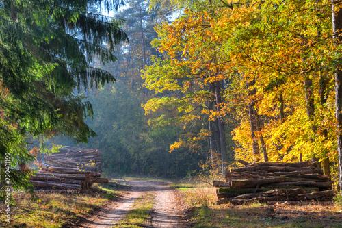Road through the autumn forest. Masuria, Poland.