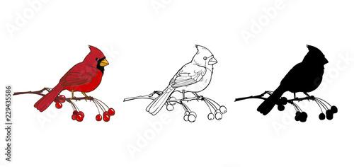 Canvas Northern cardinal