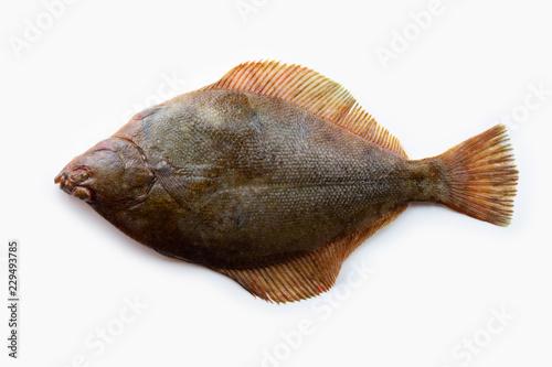 Canvastavla Nice shaped Flatfish or flounders (Pleuronectidae)also known as plaice,dab,sole or flukes, isolated on white