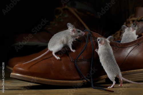 Close-up three mice and leather brown shoes on the wooden floors inside hallway. Small DoF focus put only to standing mouse.