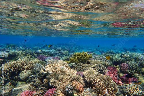 Fotografía coral reef in Egypt