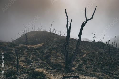 Tela landscape of natural elements, burnt forest in fog and smoke