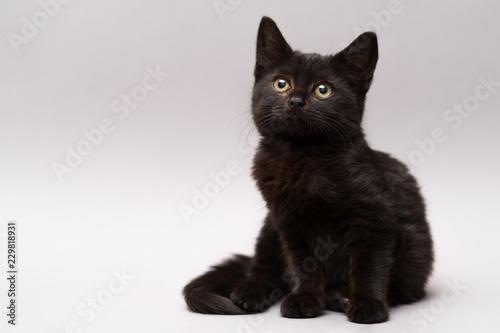 Carta da parati Black little kitten on a white background