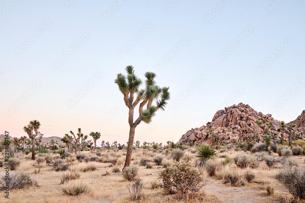 A desert landscape at sunrise
