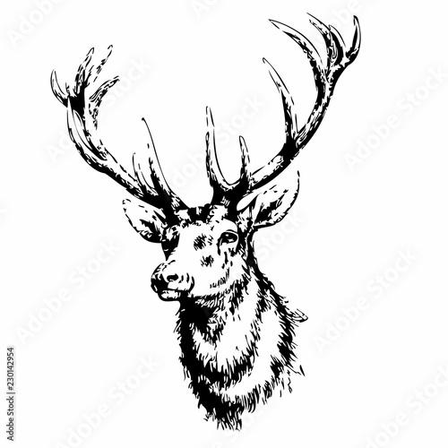 Wallpaper Mural deer head isolated on white background