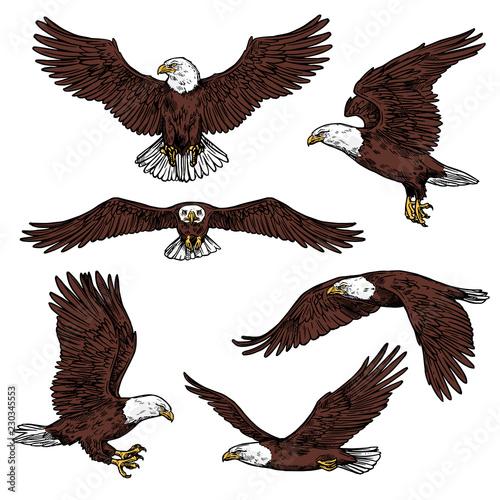 Fotografia Bald eagle predatory birds vector sketch