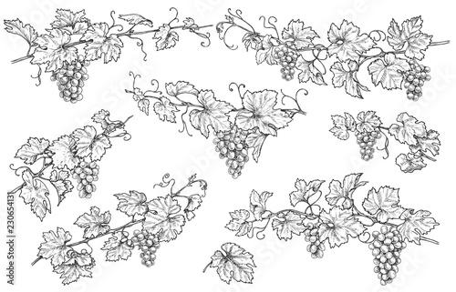 Valokuvatapetti Hand Drawn Grape Branches Set