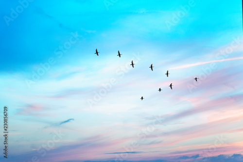 Migratory birds flying in the shape of v on the cloudy sunset sky. Sky and clouds with effect of pastel colored