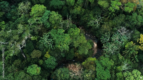Canvas Print Aerial drone image of the rainforest and a small river at Amboro National Park,