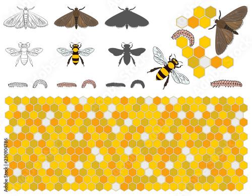 Fotografie, Tablou Bee, wax moth, waxworm, bee comb