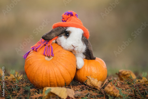Fototapeta premium Little rabbit dressed in a knitted hat and scarf with a pumpkins